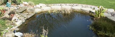 Garden Ponds & Pools
